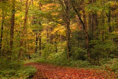 Walk in the forest for nature stress relief