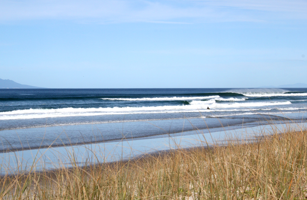 Black Swamp Surf