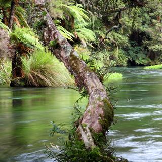 NSR Tarawera Stream