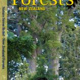 NSR New Zealand Forests HD Video
