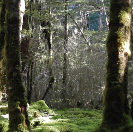 NSR Te Anau Wildlife Park