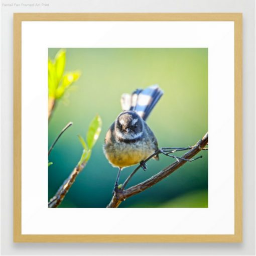 Nature Me Now - Fantail S6 Print Framed