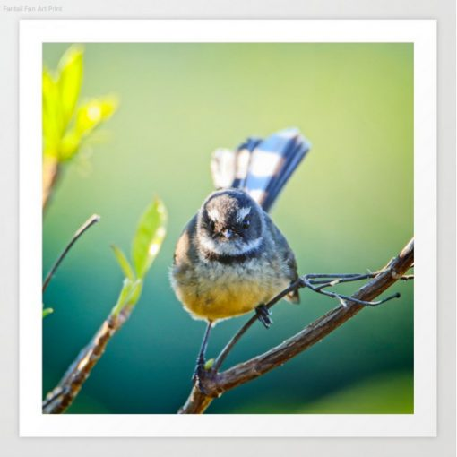 Nature Me Now - Fantail S6 Print